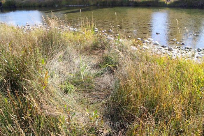グランドティートン国立公園内で動物が横たわった跡