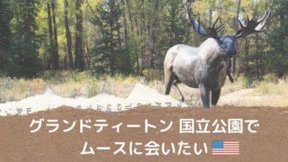 グランドティートン国立公園でムースに会える可能性の高い場所