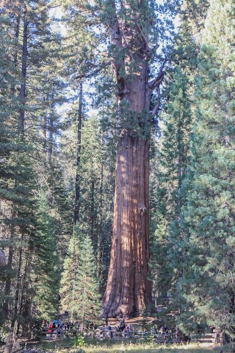 セコイア国立公園最大の見どころシャーマン将軍の木で写真を撮る人々